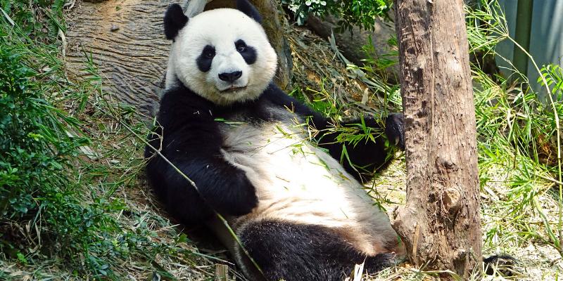 soft panda google update - SEO