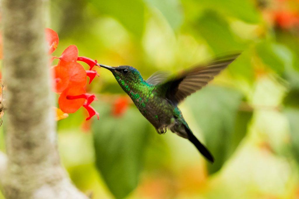 green and black hummingbird 705314 -  SEO