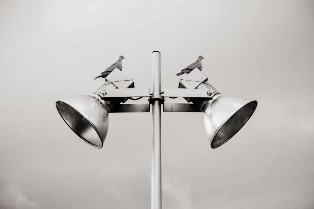 two pigeon perched on white track light 681447 -  SEO
